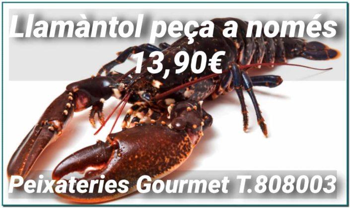 """Oferta de Llamàntol viu d'excel·lent qualitat a 13,90€ a Peixateries Gourmet Andorra. El """"Bogavante"""" destaca pel seu gust intens. Les opcions per cuinar-lo són molt variades: bullit, a la planxa, al forn, a la brasa, fregit estil Formentera, guisat. El llamàntol té un alt contingut en proteïna."""