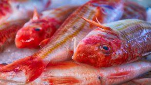 Com planificar les compres de peix de Nadal? Quan compro? Els dies de Nadal tothom vol comprar peix fresc a Andorra