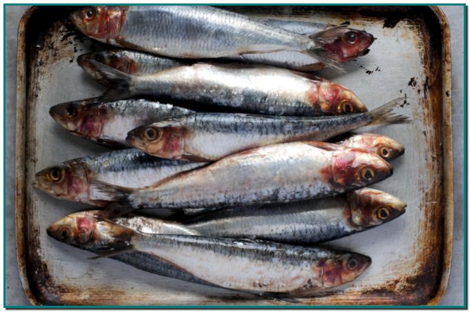 Junto con el atún, el bonito, el salmón y el boquerón, las sardinas son uno de los pescados azules más populares y consumidos en España. ¿Y cuál es la principal diferencia entre el pescado azul y el blanco? Su contenido en grasa, mayor en los azules (motivo por el que resultan más sabrosos).