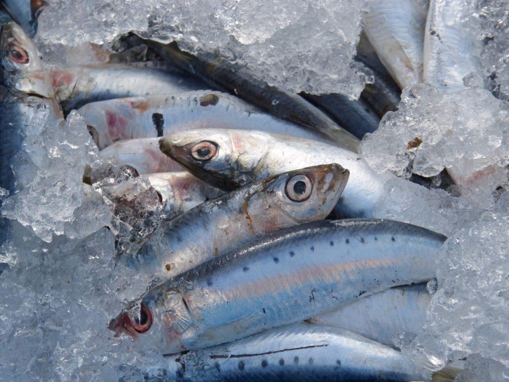 """Junto con el atún, el bonito, el salmón y el boquerón, las sardinas son uno de los pescados azules más populares y consumidos en España. ¿Y cuál es la principal diferencia entre el pescado azul y el blanco? Su contenido en grasa, mayor en los azules (motivo por el que resultan más sabrosos). Sardinas Valor nutricional (cantidad 100 g) - Calorías: 208 - Grasas totales: 11 g - Colesterol: 142 mg - Sodio: 505 mg - Potasio: 397 mg - Hidratos de carbono: 0 g - Proteínas: 25 g Las sardinas, como el resto de pescados azules, son ricas en ácidos grasos omega-3, elementos esenciales para el buen funcionamiento del organismo pero que """"el cuerpo no puede producir por sí solo, de tal manera que los debe obtener de los alimentos"""", recoge MedlinePlus, la web de los Institutos Nacionales de la Salud de Estados Unidos. Beneficios de las sardinas Las sardinas son ricas en ácidos grasos omega-3, esenciales para el organismo Los omega-3 son beneficiosos para el corazón, ya que poseen efectos antiinflamatorios y anticoagulantes, ayudan a reducir los niveles de colesterol y triglicéridos y también contribuyen a bajar la presión sanguínea. Una ración de sardinas, según la Fundación Española de Nutrición, """"casi cubre el 100% de los objetivos nutricionales recomendados para la ingesta diaria de la población"""". Y además, su aporte proteico es de alto valor biológico, por lo que son un plato más que recomendable si queremos llevar una dieta equilibrada y sabrosa. Propiedades de las sardinas Son también ricas en fósforo, selenio, yodo, hierro y magnesio"""